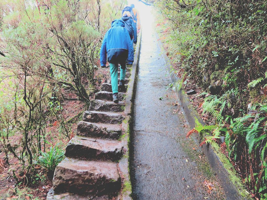 children walking up stone steps between trees,Madeira walks