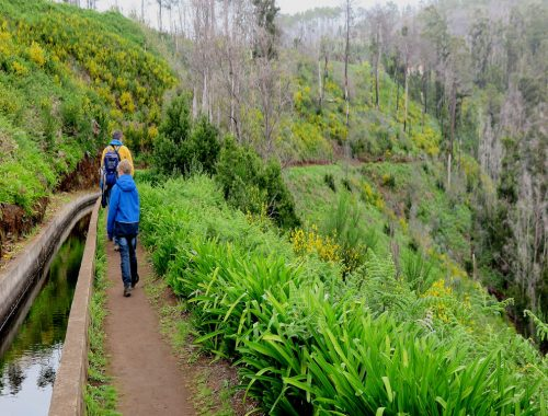 boy in blue coat on hiking trail with grass and flowers on side, hiking in Madeira
