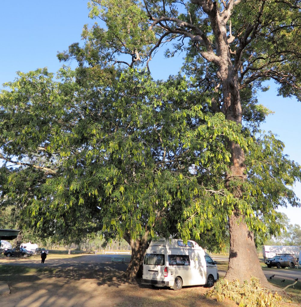 campervan under a tree in Australia