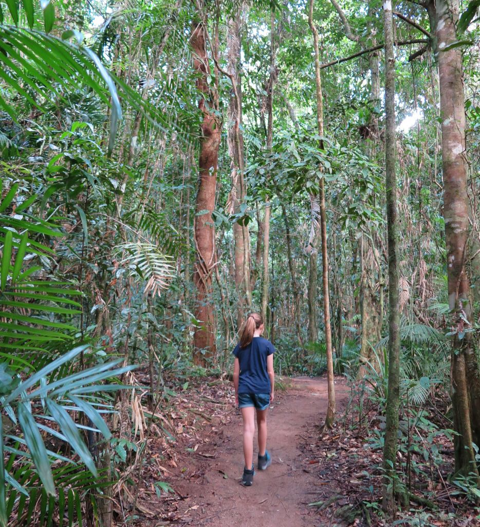 hiking path in the middle of trees in Mossman Gorge
