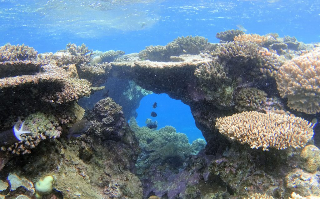fish and coral at the Great Barrier Reef
