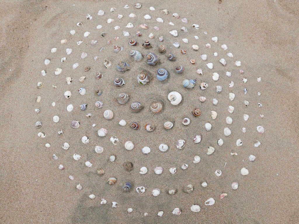 shells in a spiral on the beach