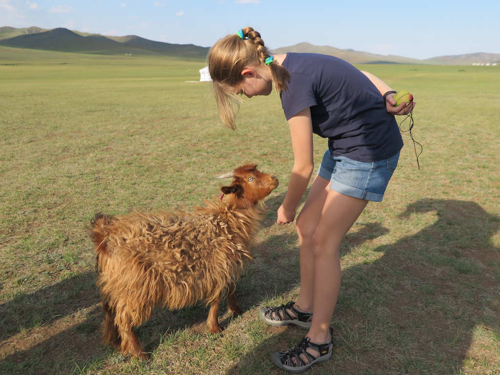girl and a cashmere goat, homeschooling while travelling