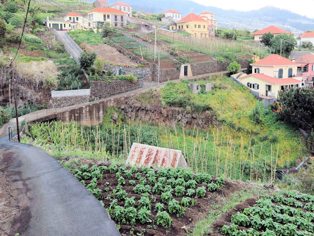 houses and gardens around a winding road in maderia