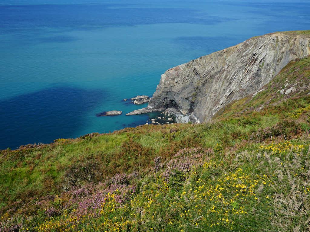 wildflowers against a blue sea on the Pembrokeshire Coastal Path