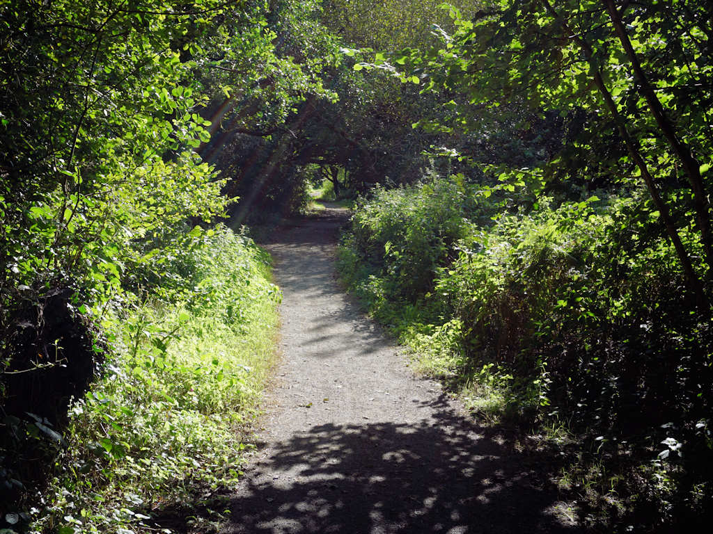 sunshine through the tress on a woodland path at Cardigan Bay Holiday Park