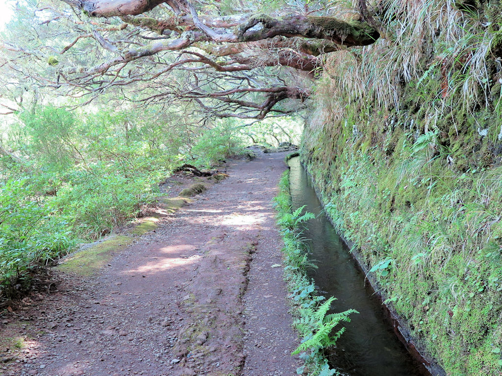 rocky earth path next to irrigation channel under tree canopy, Madeira hiking