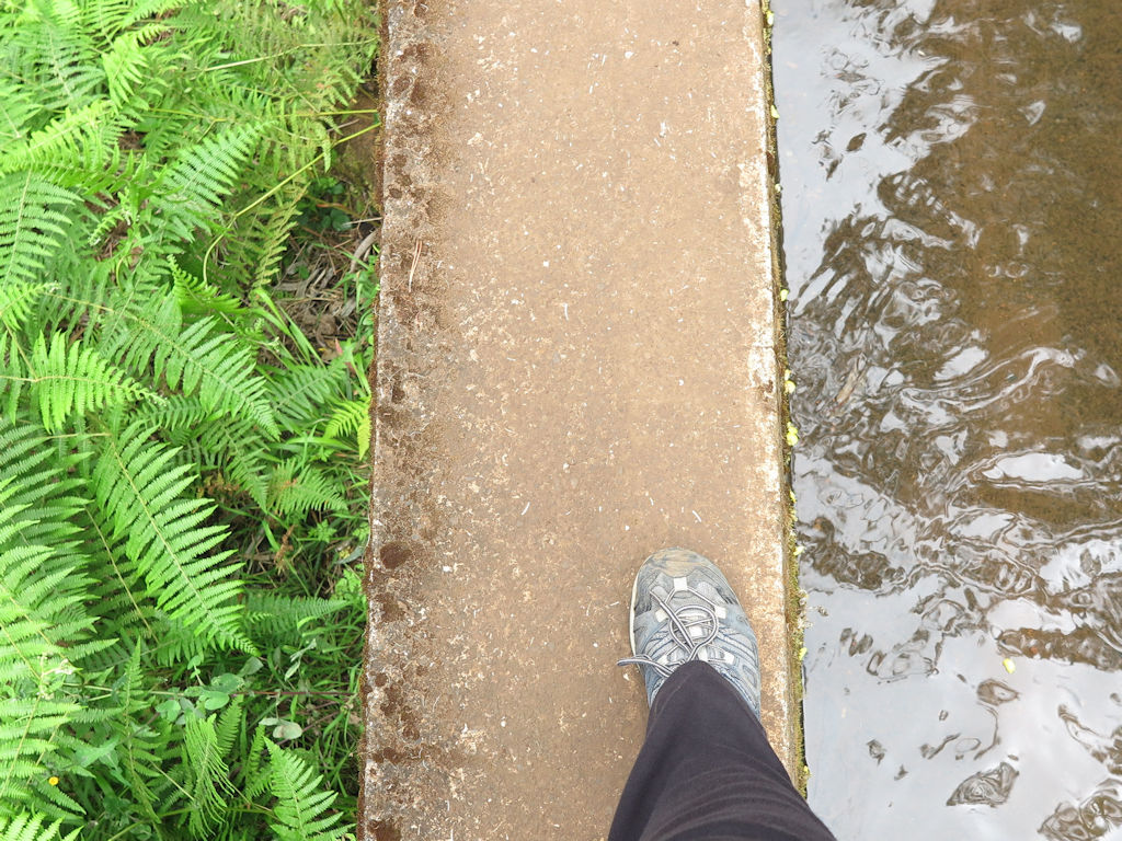 walking boot foot on a concrete path, green ferns on one side, water on the other, Madeira hiking