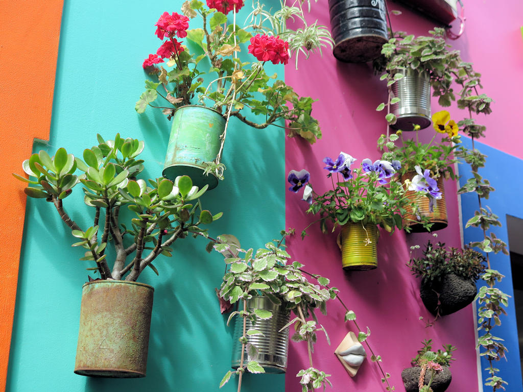 colourful plant pots with colourful flowers on a green and pink wall, Madeira family holiday tips